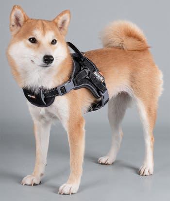Dog Helios 'Scorpion' Спортивная высокоэффективная шлейка для собак свободного выгула - маленькая Pet Life